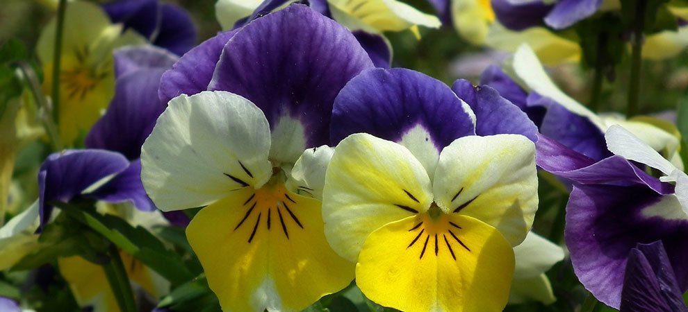 5 Flowers to Plant this Spring