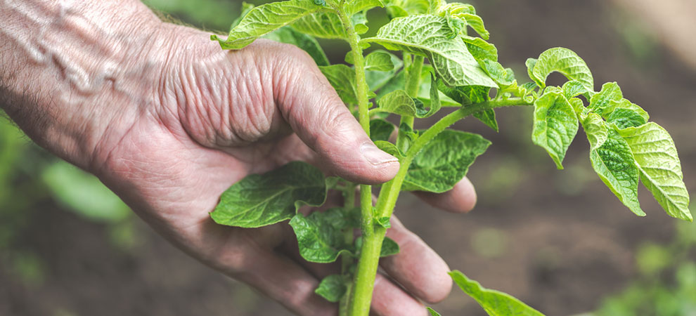 5 Benefits of Gardening for Older People